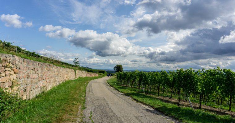 Ruta a pie: de Ribeauvillé a Riquewihr